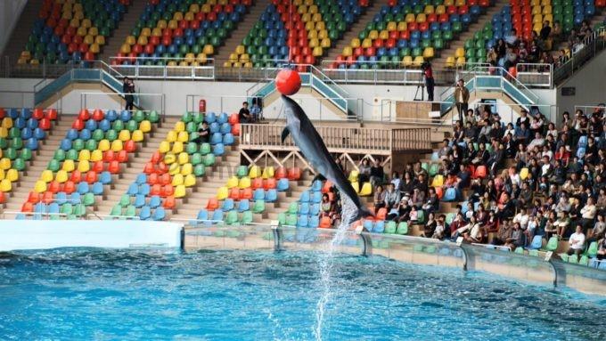 アドベンチャーワールドのイルカのショー