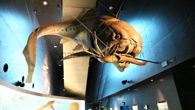 アクアマリンふくしまの展示エリア「プロローグ 海・生命の進化」