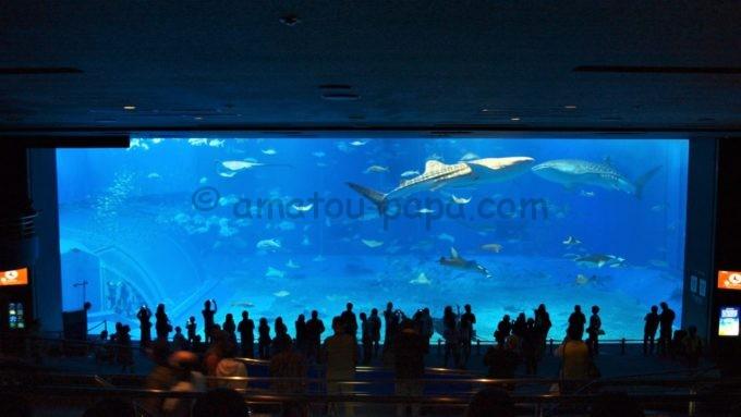沖縄美ら海水族館のジンベエザメが泳ぐ大水槽