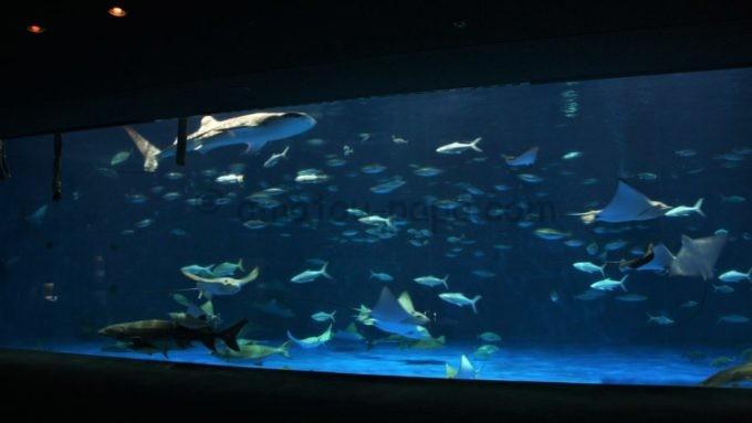いおワールドかごしま水族館の黒潮大水槽