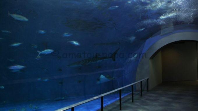 いおワールドかごしま水族館の黒潮大水槽のトンネル