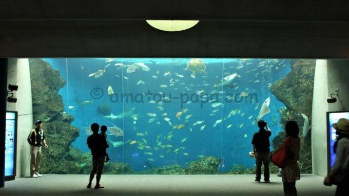 鴨川シ―ワールドの水槽