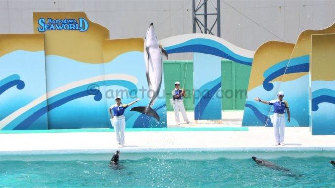 鴨川シ―ワールドのイルカショー