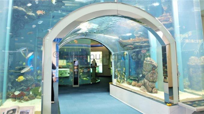 マリンワールド海の中道の水槽トンネル