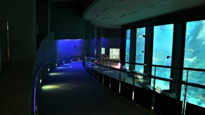 マリンワールド海の中道の水槽