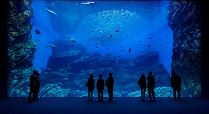 仙台うみの杜水族館のいのちきらめく うみ」