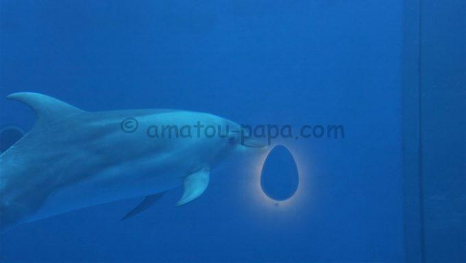 大分マリーンパレス水族館「うみたまご」のイルカ