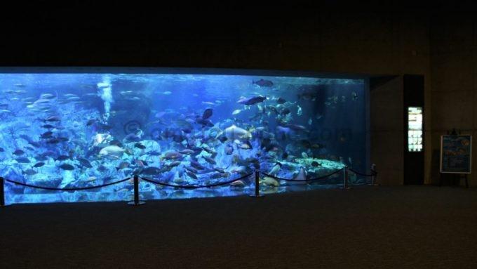 大分マリーンパレス水族館「うみたまご」の水槽