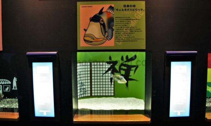 大分マリーンパレス水族館「うみたまご」のおもしろ展示