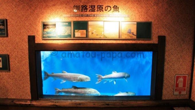 世界淡水魚園水族館 アクア・トト ぎふの「イトウ」