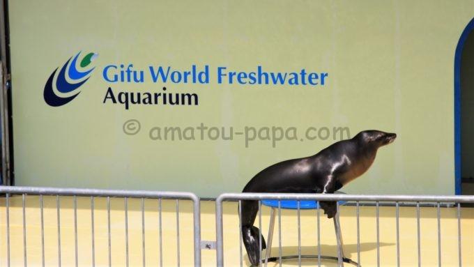 世界淡水魚園水族館 アクア・トト ぎふの「アシカのショー」
