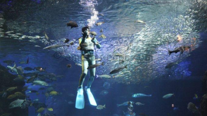 新江ノ島水族館の水槽を泳ぐダイバー