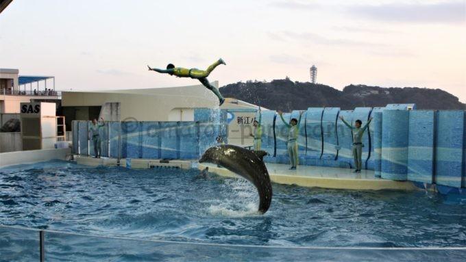新江ノ島水族館のイルカショー
