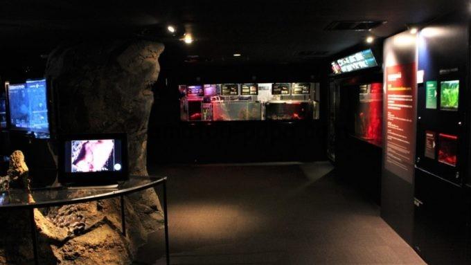 新江ノ島水族館の館内