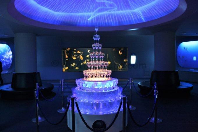 新江ノ島水族館のクラゲ