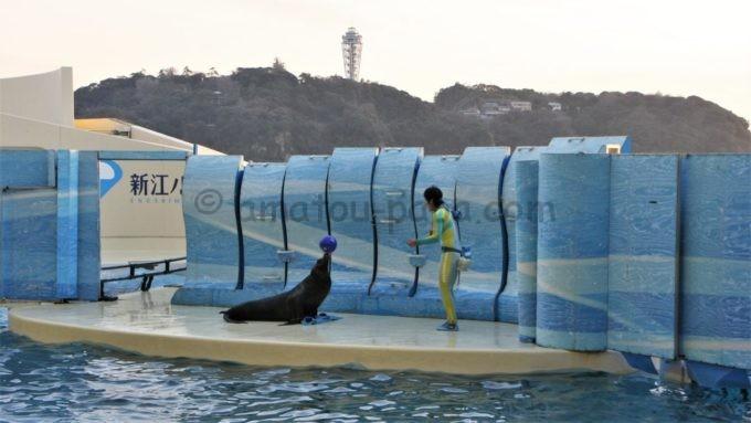 新江ノ島水族館のアシカショー