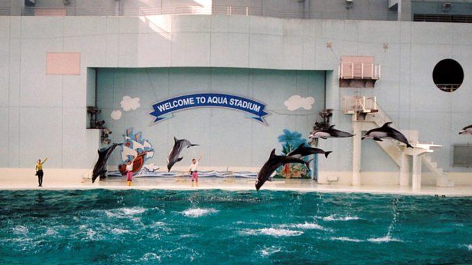 横浜・八景島シーパラダイスのイルカショー