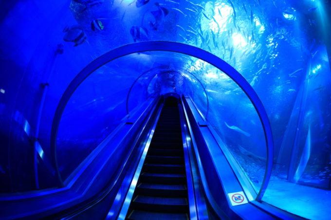 横浜・八景島シーパラダイスの水中トンネル