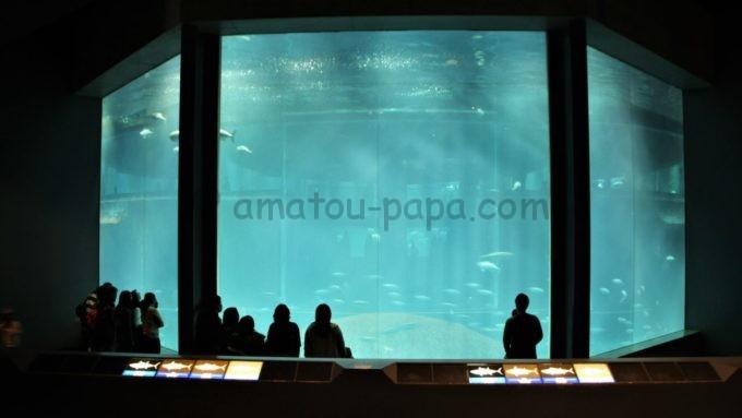 葛西臨海水族園の水槽