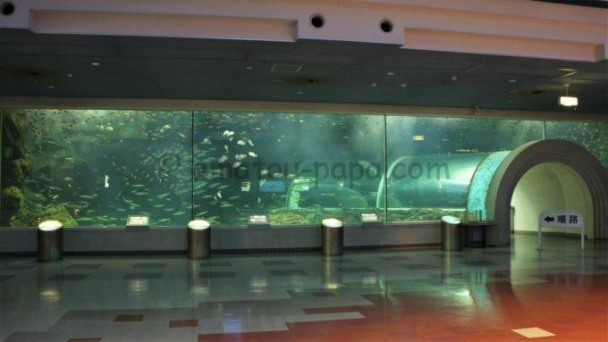 新潟市水族館 マリンピア日本海の「暖流の旅」