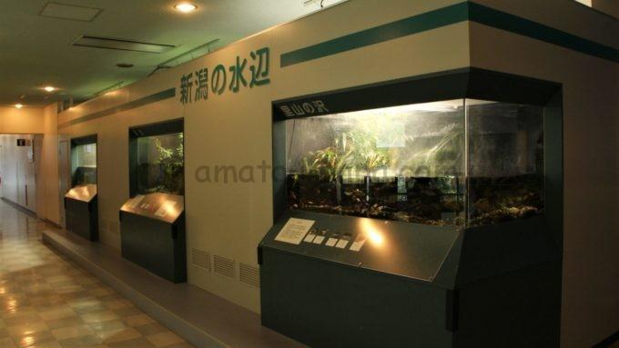 新潟市水族館 マリンピア日本海の「新潟の水辺エリア」