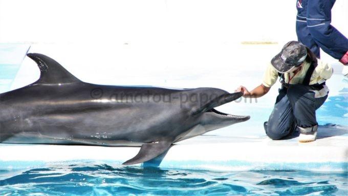 新潟市水族館 マリンピア日本海の「イルカ」