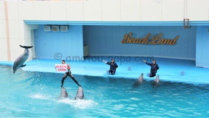 南知多ビーチランドのイルカショー(トレーナーがイルカに乗る)