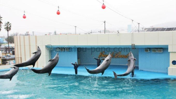 南知多ビーチランドのイルカショー(複数のイルカがジャンプ)