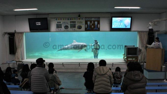 南知多ビーチランドのイルカの水中ショー