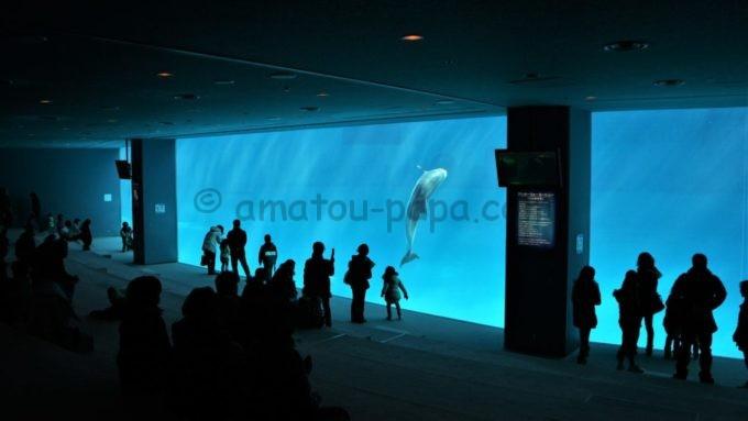 名古屋港水族館のイルカ