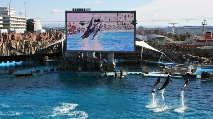 名古屋港水族館のイルカのショー