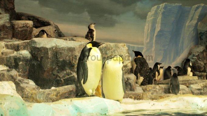 名古屋港水族館のペンギン
