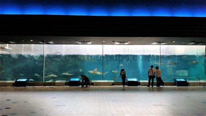 須磨海浜水族園の大水槽