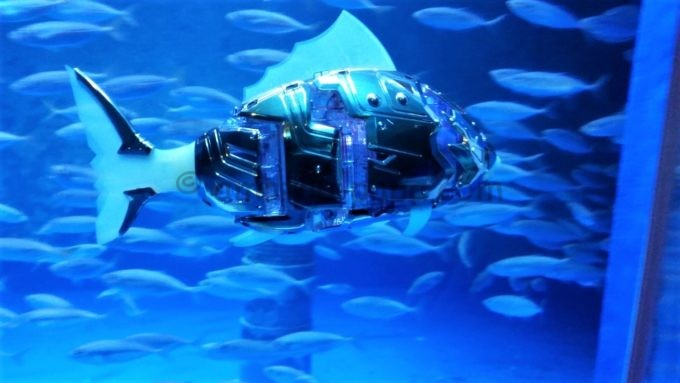 須磨海浜水族園の機械の魚