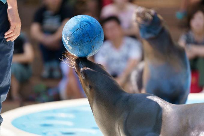 サンシャイン水族館のアシカショー