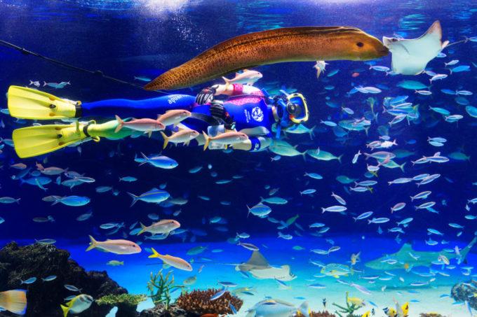 サンシャイン水族館の水中パフォーマンス