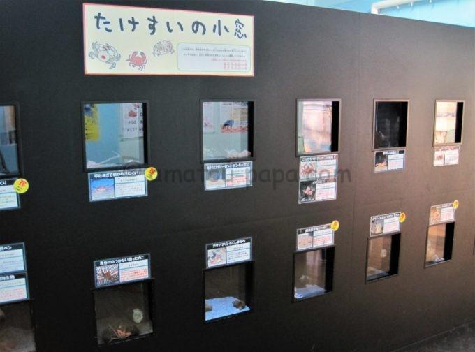 竹島水族館の面白いコメントが書かれた水槽