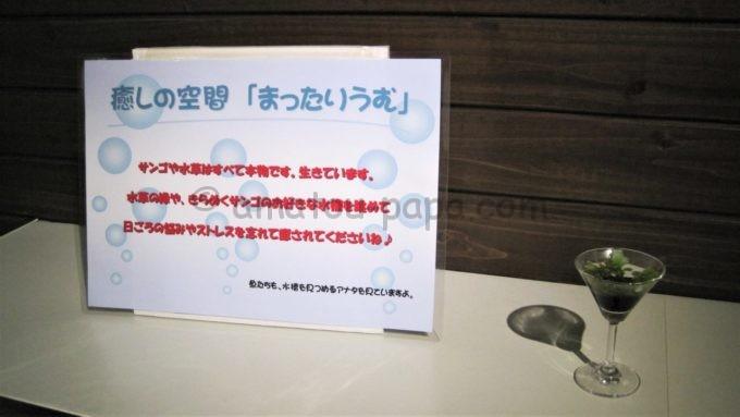 竹島水族館の「癒しの空間 まったりうむ」