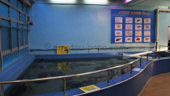 竹島水族館のパクパクおさかなプール