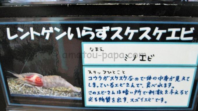 竹島水族館のミノエビのコメント