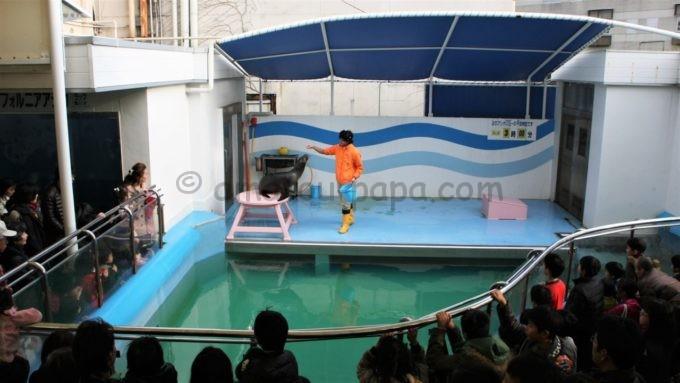 竹島水族館のアシカショー