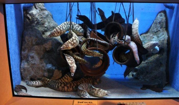 竹島水族館のウツボ