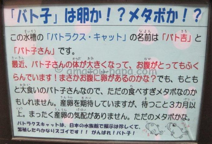 竹島水族館のバト子のコメント