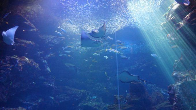 京都水族館の水槽(京の海)
