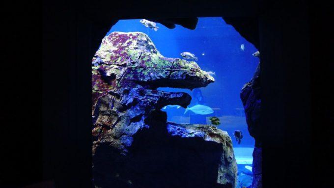 男鹿水族館GAOのゴジラ岩
