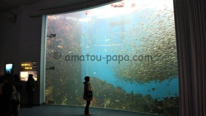 のとじま水族館の「魚の群れと海藻の海」水槽