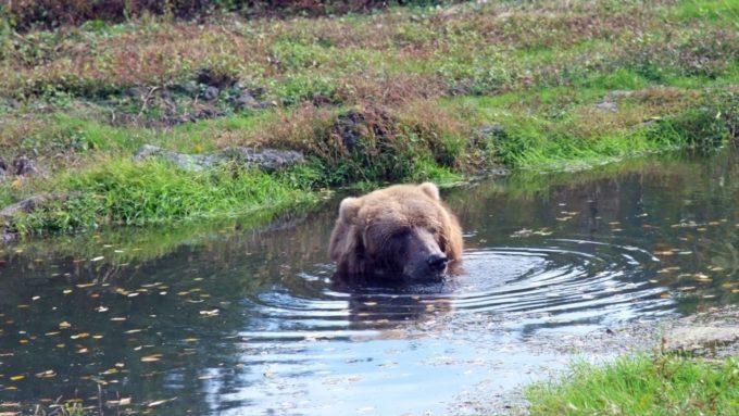 富士サファリパークの熊