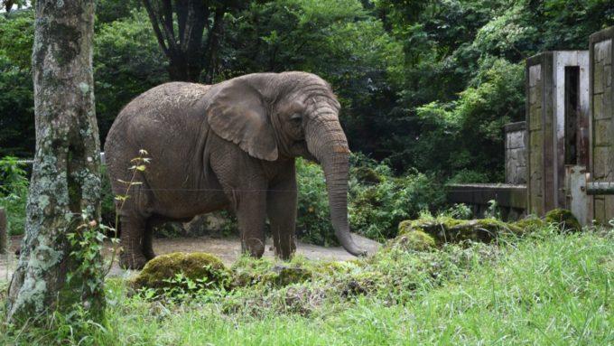 富士サファリパークの象
