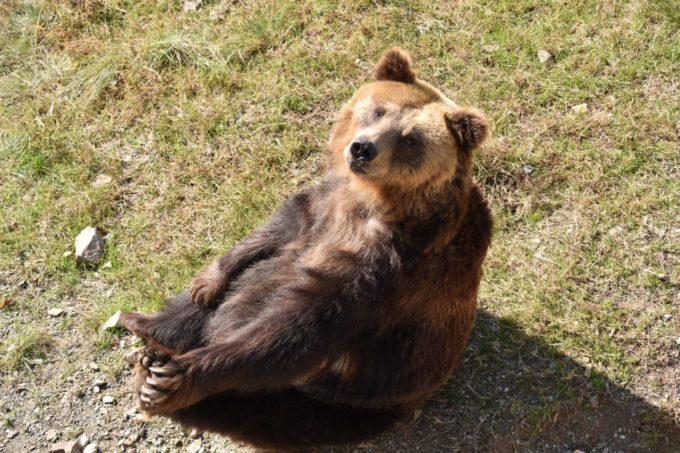 姫路セントラルパークの熊(クマ)