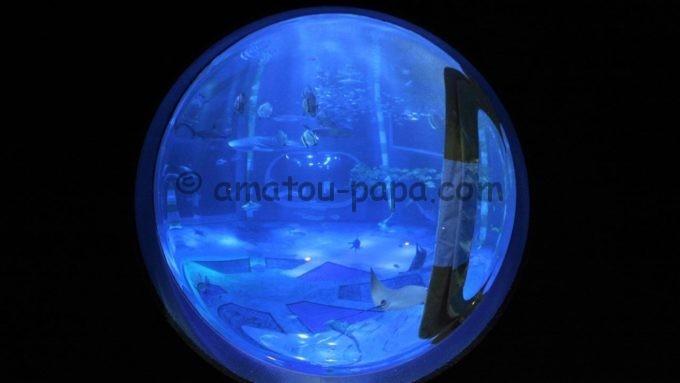 のとじま水族館のジンベエザメ館 青の世界(丸型)
